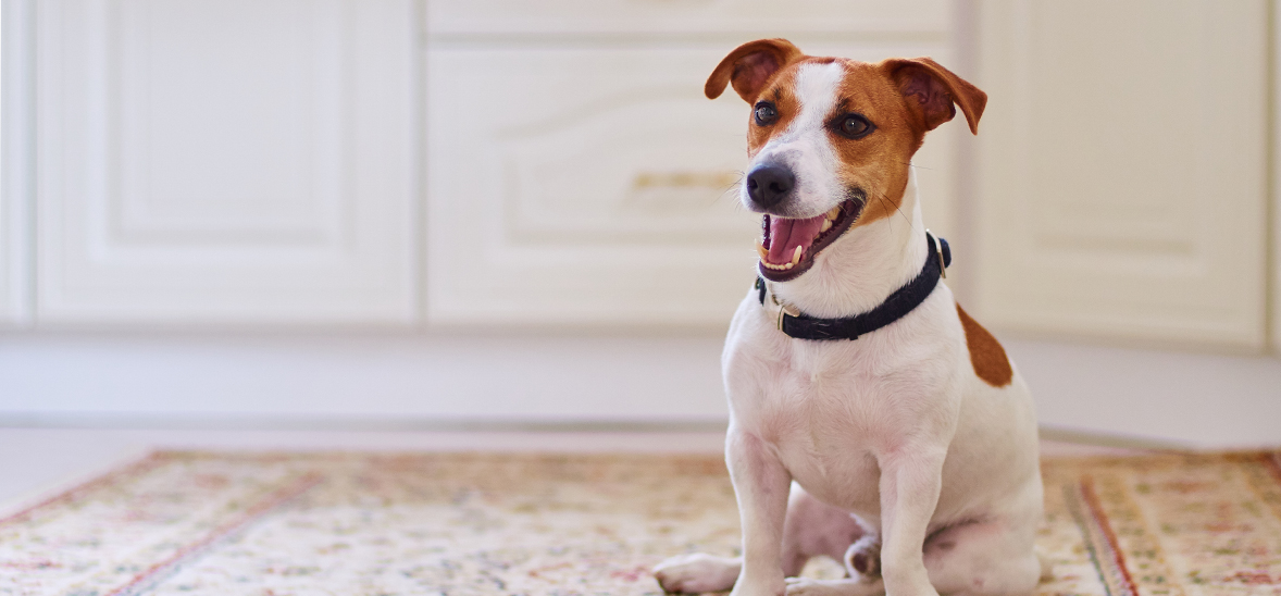 how smart property managers are partnering with your pets the