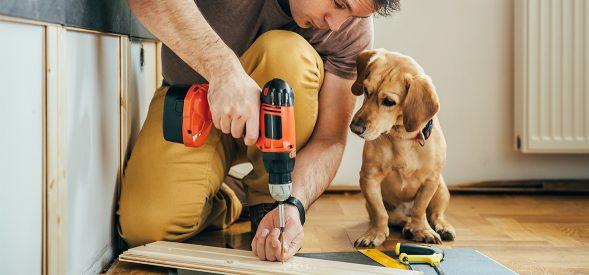 Renovations dog